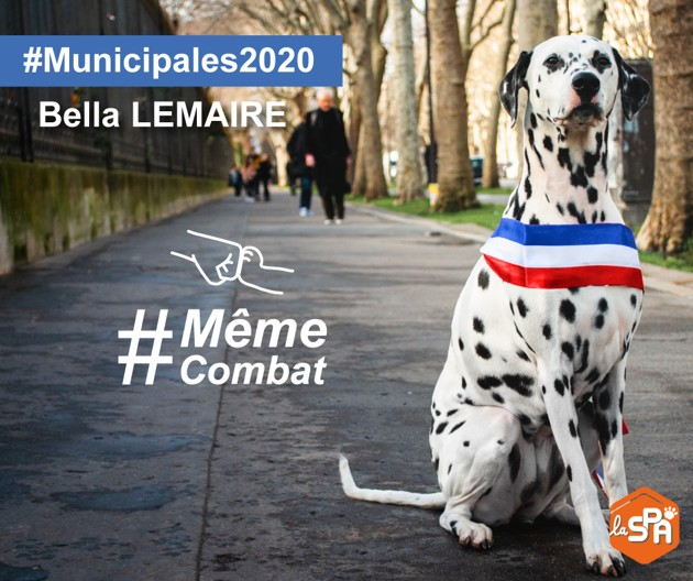 Interview exclusive : Bella Lemaire, la chienne candidate aux Municipales 2020 qui milite pour la cause animale