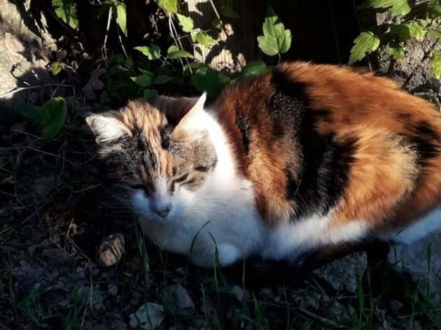 Les chroniques de Maître Terrin : une soixantaine de chats en danger ont besoin de votre aide !