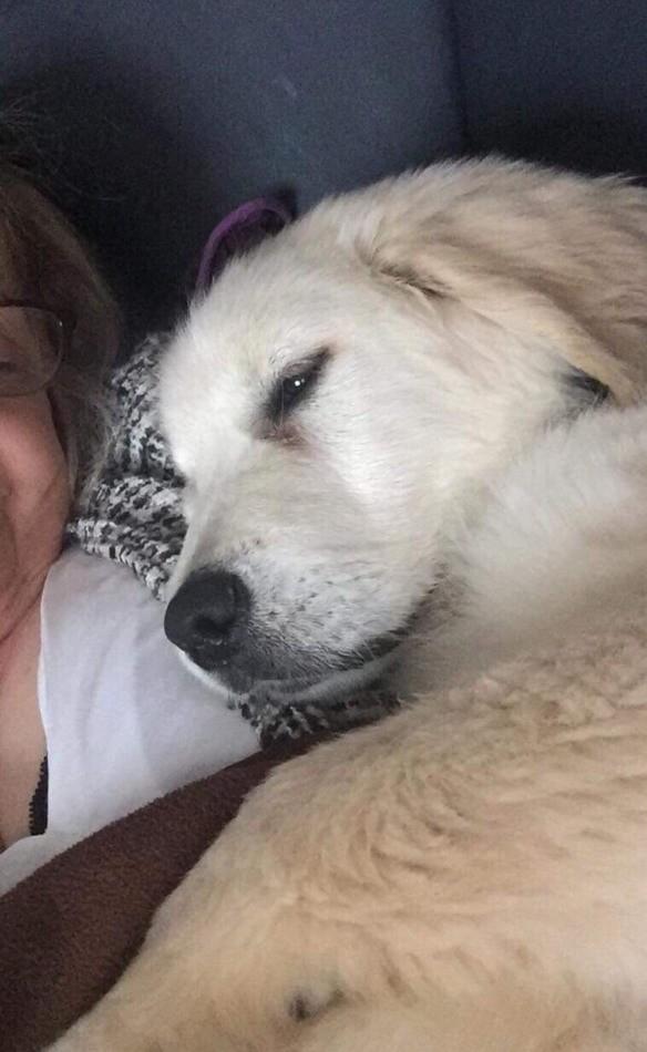 Elle achète un chien chez un éleveur et doit l'euthanasier par amour : un texte bouleversant