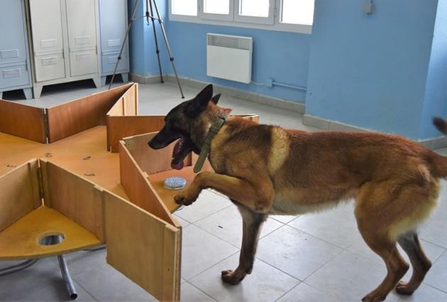 L'école des chiens renifleurs de Gramat forme les héros de demain LOOPING%20%C2%A917e%20Groupe%20d%E2%80%99Artillerie%20%2811%29-content-5cb9cee8a2437