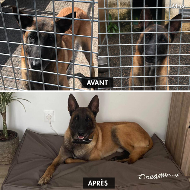 Avant / après : découvrez la transformation de ces 10 chiens de refuge après leur adoption !