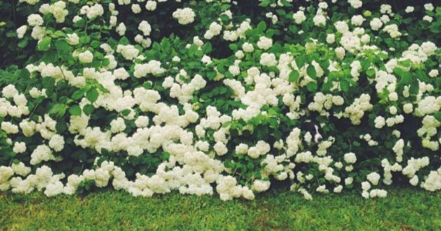 Un chien se cache dans les buissons de fleurs : 10% de la population parvient à le trouver en moins d'1 minute !