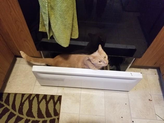 Son chat se cache constamment dans des endroits interdits: elle partage des photos avec le monde entier