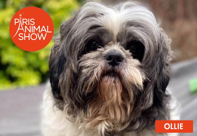 Paris Animal Show lance le premier show consacré à l'adoption !
