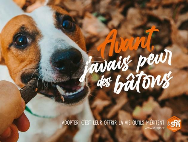 La SPA lance son « mois de l'adoption » pour trouver des familles aux animaux abandonnés cet été