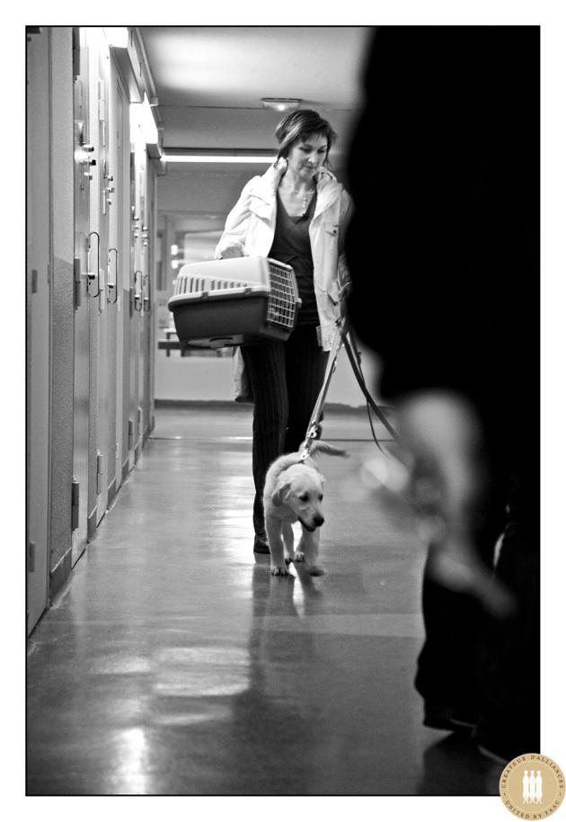 La médiation animale, ou comment le chien peut sauver un prisonnier en rupture avec la société ?