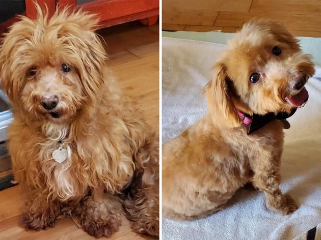 De maltraités à adorés : ces 3 chiens de refuge ont été métamorphosés par l'amour !