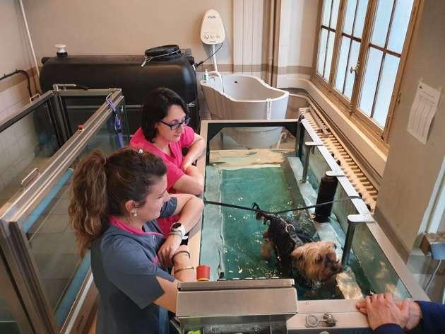 Aider son animal douloureux grâce à la physiothérapie : un vétérinaire livre de précieux conseils