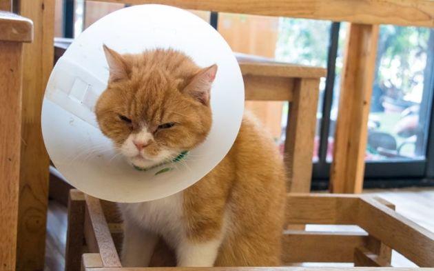Mon chat a une conjonctivite : causes, symptômes et traitement