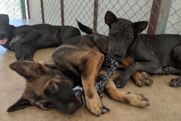 Hope for Strays : ce couple a décidé de vider les rues de tous les chiens errants