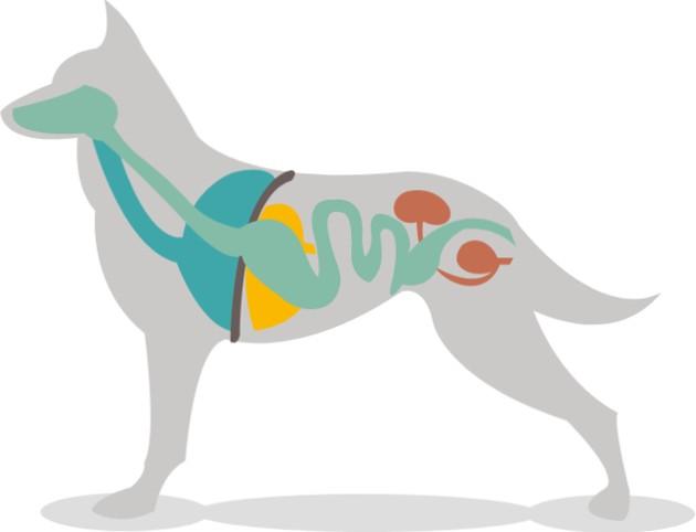 Complément alimentaire pour chien : découvrez ce petit geste qui peut tout changer pour sa santé !