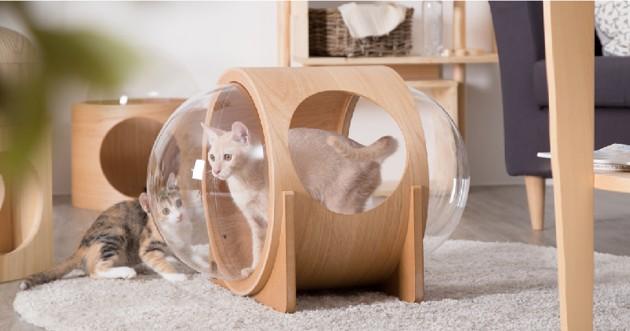 3 niches ultra-canons qui vont envoyer votre chat directement dans l'espace !