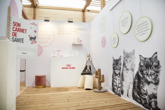 Grandir by Royal Canin, l'événement éphémère pour tout savoir sur les chatons