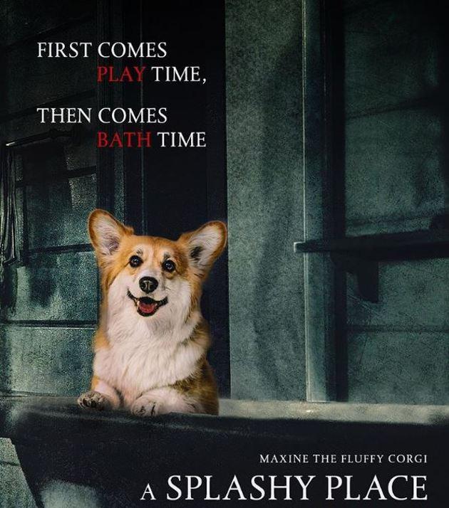 Cet adorable Corgi se glisse dans des affiches de films célèbres