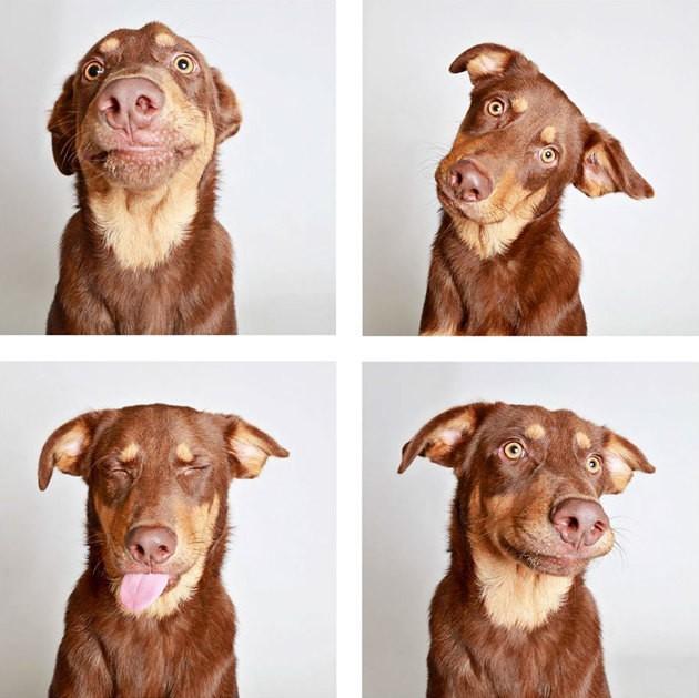 Ces photos façon Photobooth, aident les chiens en refuge à trouver une famille