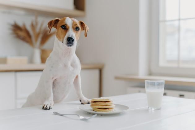 Surpoids, obésité et arthrose du chien et du chat : une nutritionniste nous donne tous ses conseils