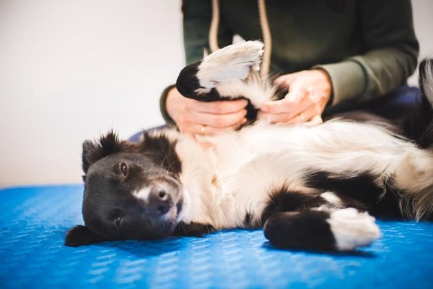 Moins de douleurs, plus de mouvements : comment l'ostéopathie peut-elle aussi soulager nos animaux ?