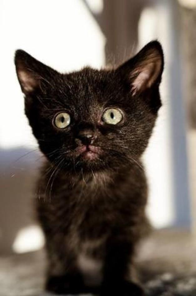 arthur chaton adoption