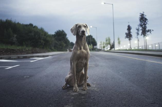 Un chien seul sur la route en ville