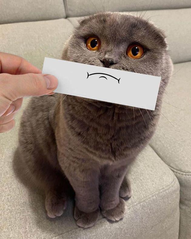 Il dessine des masques de déguisement pour son Scottish Fold, et le chat est totalement métamorphosé !