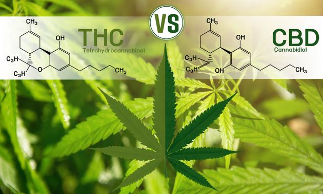 Des médicaments à base de cannabis pour les animaux ?