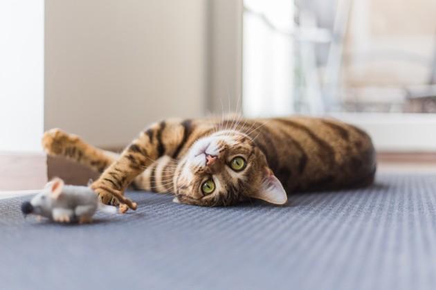 Arthrose du chat : Quelles sont les bonnes habitudes à adopter ?