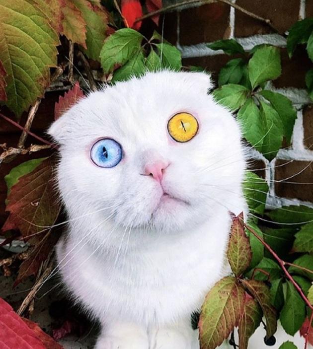 Ce chat russe a séduit Instagram avec ses yeux spectaculaires venus d'une autre planète !
