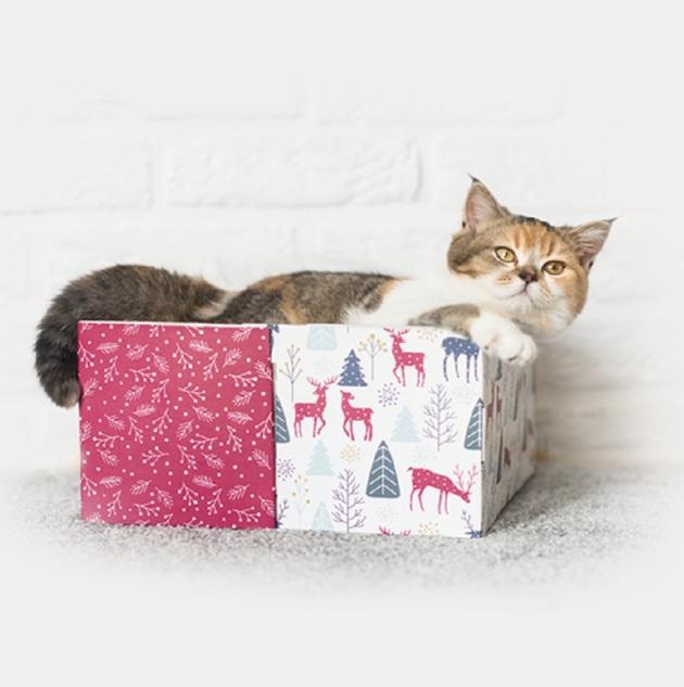 5 astuces pour faire de votre chat le roi de la maison