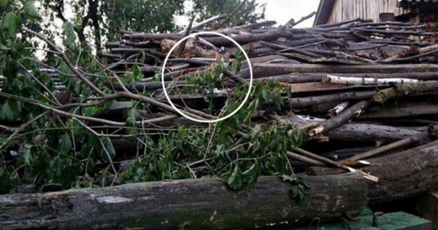 Chat caché dans les branches d'arbre : impossible de le trouver en moins d'1 minute !