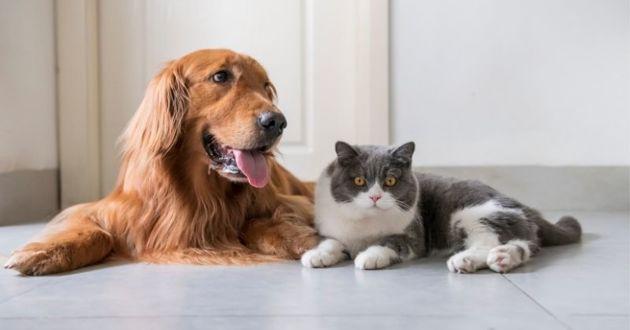 Trophées Animal Challenge & coup de cœur 2019 : le challenge annuel des fournisseurs du marché des animaux de compagnie !