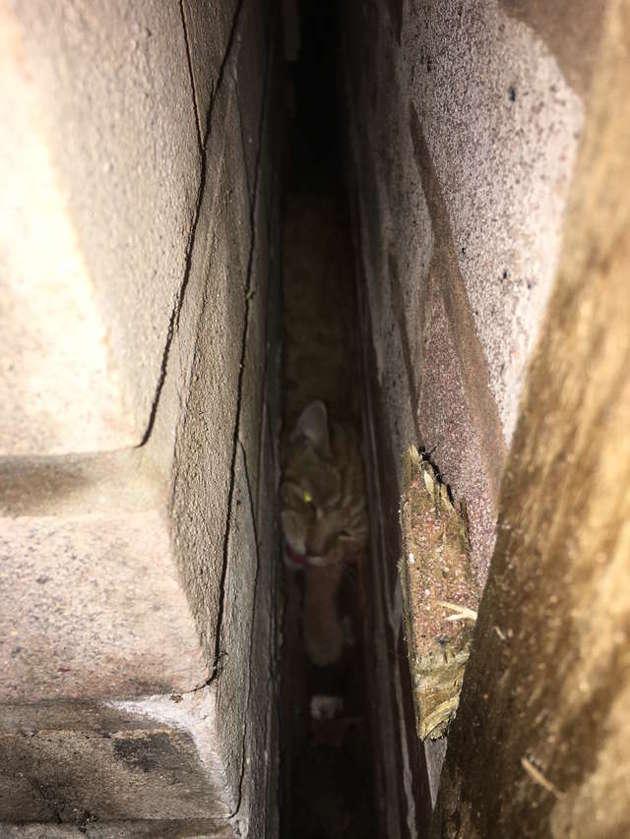 chat coincé entre deux maisons