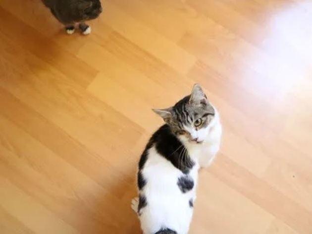 Ces 40 chats atteints du coryza ont besoin de votre aide !