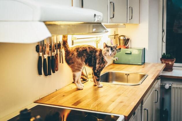 chat dans la cuisine