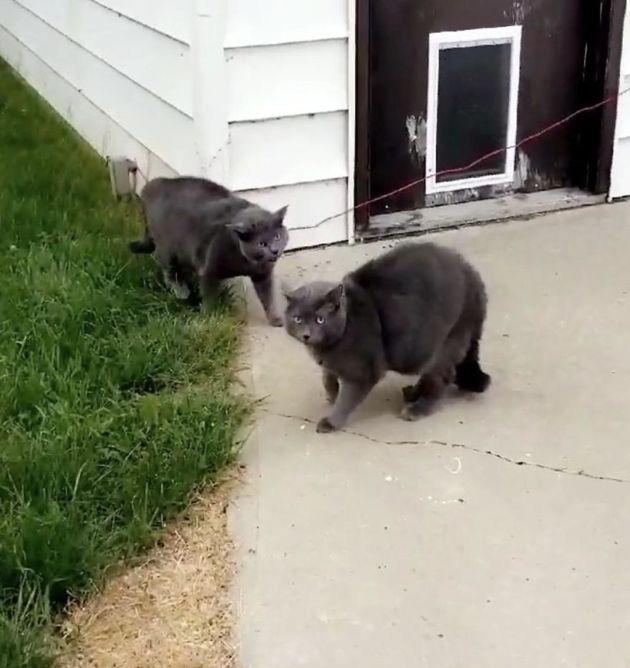Elle laisse son chat dans le jardin et entend du chahut : quand elle revient, elle pense qu'elle hallucine !