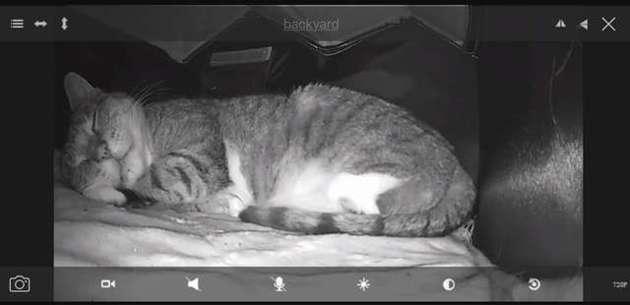 Il installe une caméra dans la niche des chats : le lendemain, son coeur explose en mille morceaux !