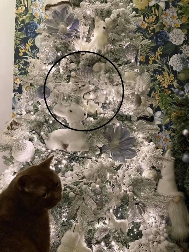 Chat caché dans un sapin de Noël : il est presque impossible de le trouver !