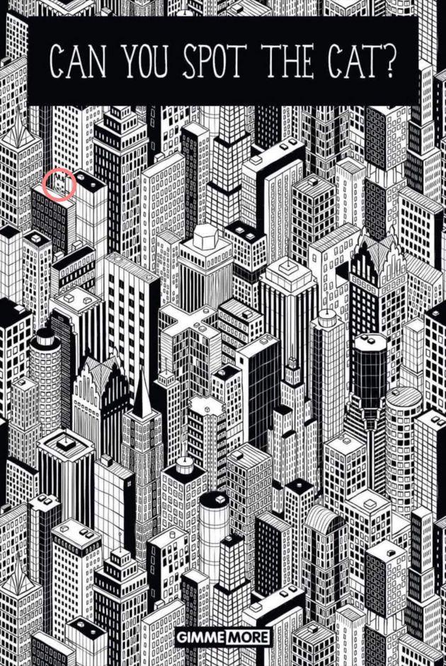Chat caché au milieu des immeubles : seuls 5% des gens sont capables de le trouver en moins d'1 minute !