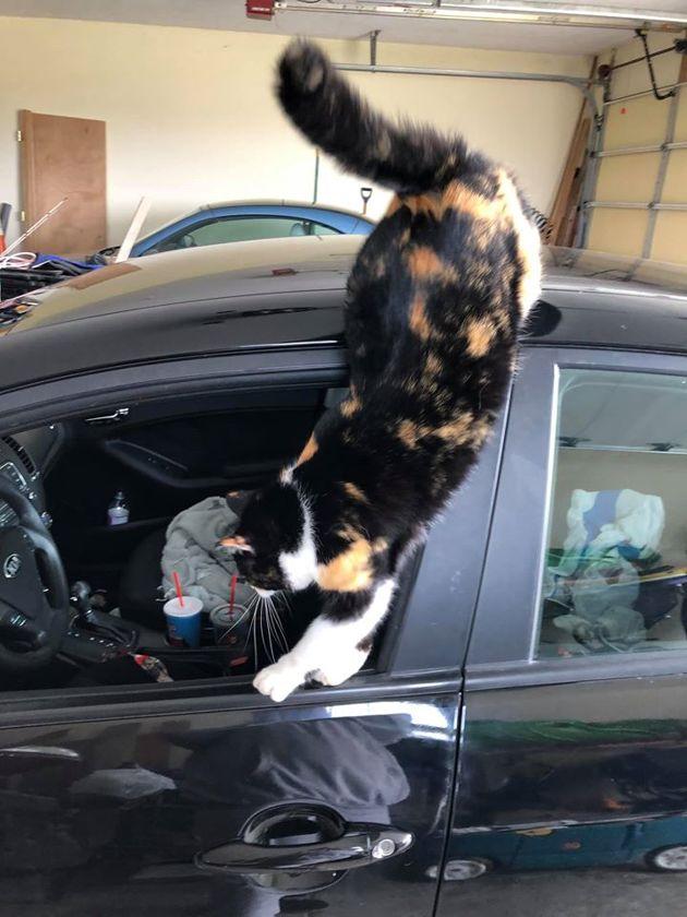 Assise dans sa cuisine, elle entend un bruit bizarre : en allant dans son garage, elle explose de rire