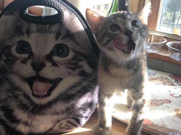 chaton et sac