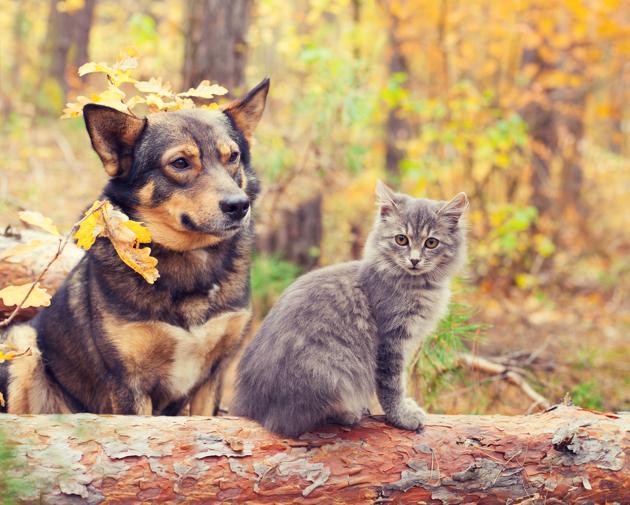 Peut-on être écolo et avoir un animal de compagnie ?