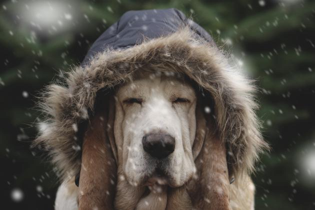 protéger son chien du froid avec un manteau
