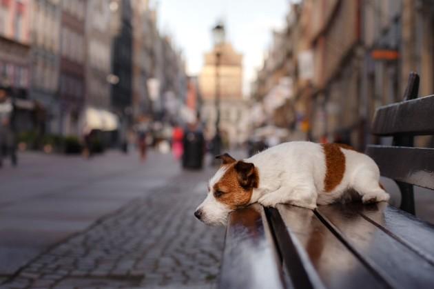 Divagation de chiens et de chats : voici tout ce qu'il faut savoir