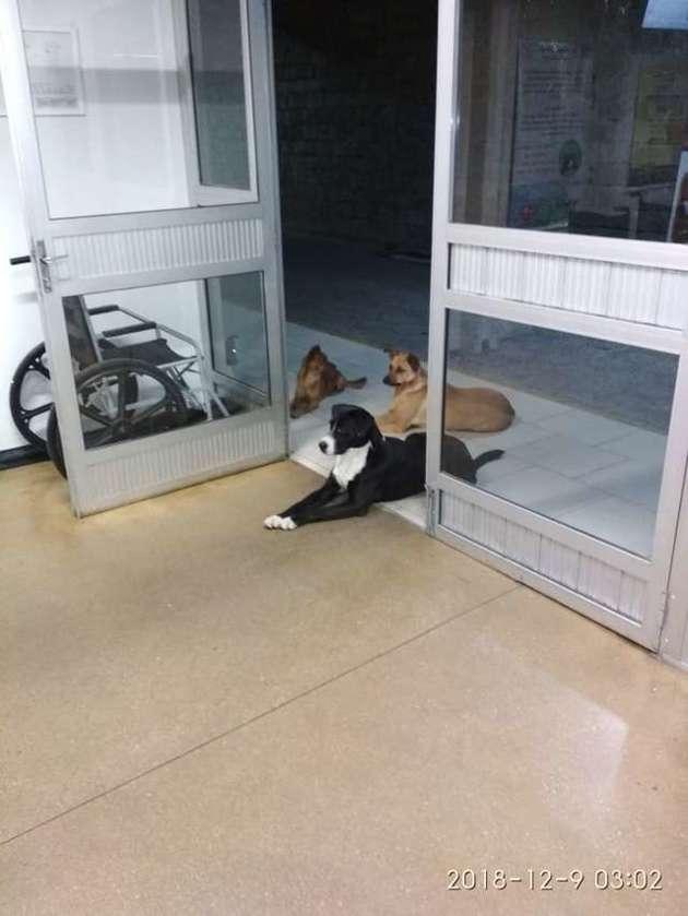 chiens qui attendent devant hôpital
