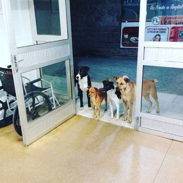 chiens hôpital