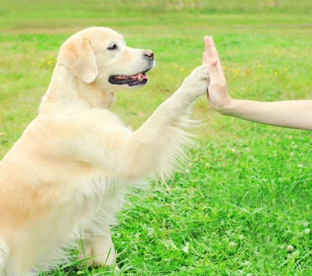 Les chiens peuvent-ils mentir ?