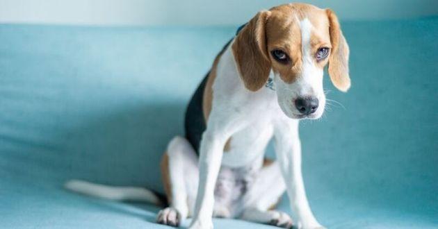 Le stress chez le chien : 9 signes à surveiller
