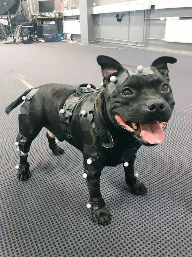 10 chiens qui ont un travail hors du commun ! (Photos)