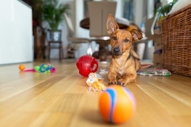 Arthrose du chien : comment prévenir l'apparition de la maladie ?
