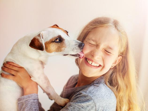Pourquoi le chien lèche-t-il le visage ?