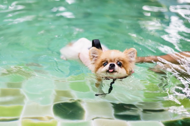 Arthrose du chien : Quelles sont les bonnes habitudes à adopter ?